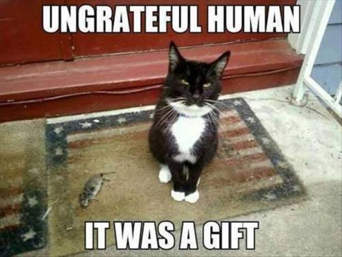 Ungrateful Human