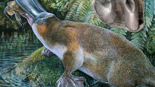 Godzilla platypus