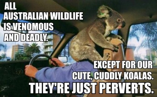 All Australian wildlife
