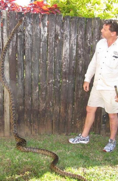 Cairns snake