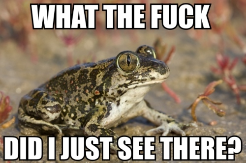 What the fuck toad