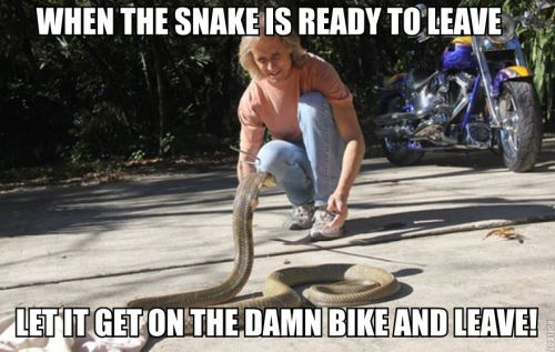 When the snake is ready to leave